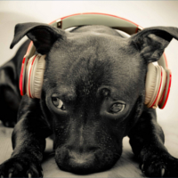music_profile