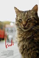 kedi-poster