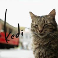 kedi_profile
