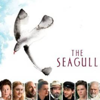 seagull_profile