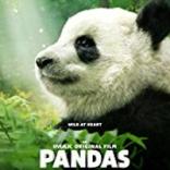 pandas_profile